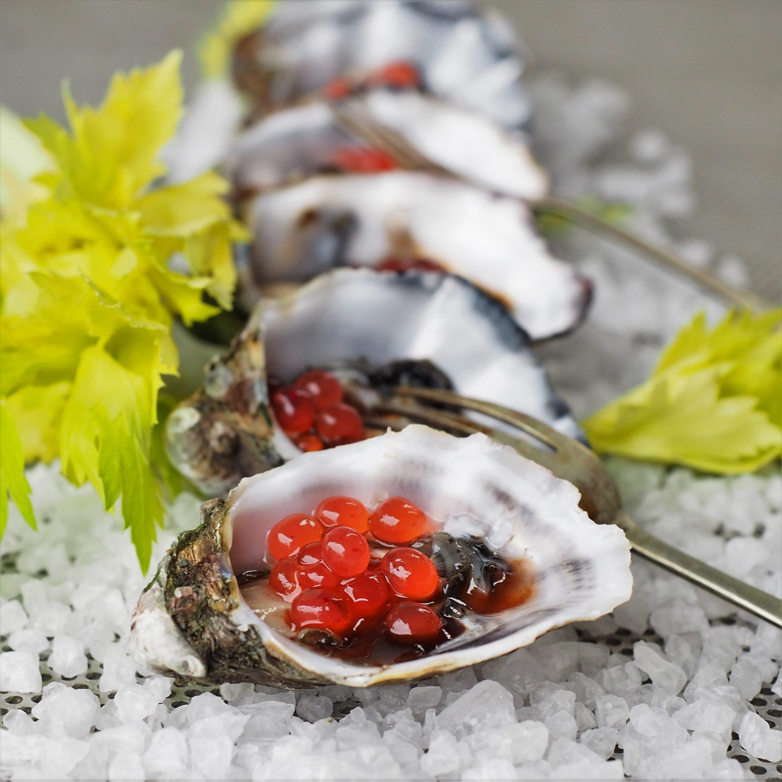 Bloody Mary Oysters with Native Bush Tomato Flavour Pearls